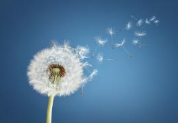 ROUTINE - Contrastare i fastidi da polline e fioriture